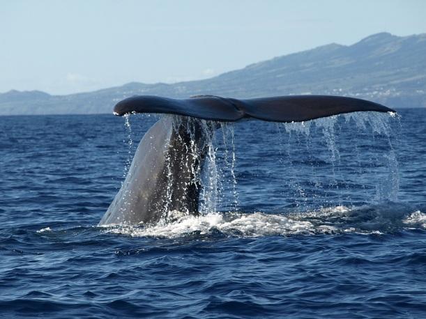 A szerencsés utazó akár ilyen közelről is meglesheti a bálnákat!
